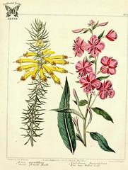 Anglų lietuvių žodynas. Žodis rosebay willowherb reiškia <li>rosebay willowherb</li> lietuviškai.