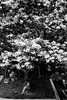 In bloom (rvrossel) Tags: inbloom trees swing girlonswing kids fujixt10 fujixf35mmf2 foliage backyard playing littlegirl girl