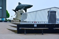 Shark Fence (violetchicken977) Tags: fence thedeep hull greatwhiteshark ~~fencefriday~~