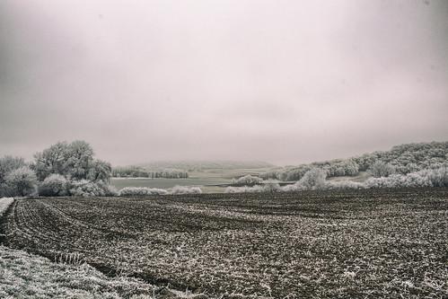Champs glacés