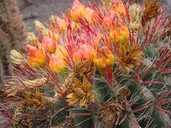 Kaktus (Gartenzauber) Tags: cffaa floralfantasy