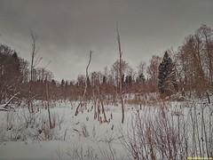В болота занесёт иль может в мир иной?