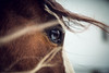 molly (Jen MacNeill) Tags: horse horses paint pinto equine stable bay blueeyes blueeye
