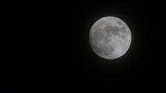 My full moon (Massimo Buccolieri) Tags: fullmoon