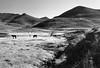Semongkong | Lesotho (tender urbanities) Tags: agfaphoto apx100 pentax mx smc pentaxm 128 28mm film flickr landscape nature mountainkingdom khotsopulanala southernafrica mountains bw horses agfaphotoapx100 pentaxmx smcpentaxm12828mm lesotho
