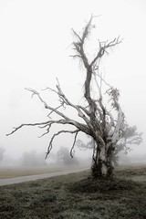 woebegone winter (jeneksmith) Tags: canon tree dead death plant fog foggy lucid mysterious scary sidewalk limbs weeds vines nature