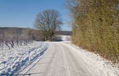 A beautiful Winter Morning outside of Dahenfeld. (andreasheinrich) Tags: landscape path tree winter january morning sunny snowy cold germany badenwürttemberg neckarsulm dahenfeld deutschland landschaft weg baum januar morgen sonnig verschneit kalt nikond7000