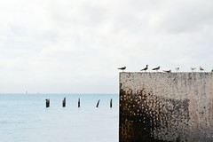 Gulls in a Row by Ocean (Image Catalog) Tags: ocean sky seagulls water birds wall clouds gulls whitebackground minimalist publicdomain