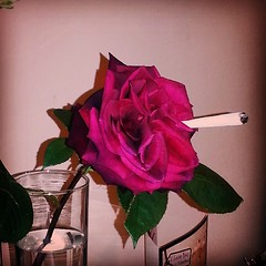 Stoned roses.
