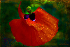 Dancer in a new light (Mara ~earth light~) Tags: flower texture photoshop dancer fantasy creativecommons poppy newlight decease mara~earthlight~