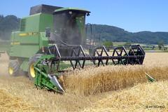 Weizen-Ernte (HITSCHKO) Tags: landwirtschaft bern ernte weizen mähdrescher limpachtal johndeere1188hydro4