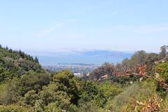 IMG_4600 (cheryl's pix) Tags: california berkeley botanicgarden botanicalgardens botanicalgarden botanicgardens berkeleyca berkeleybotanicalgarden ucbotanicalgarden universityofcaliforniabotanicalgarden universityofcaliforniabotanicalgardenatberkeley