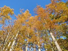 autum forest