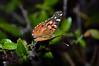 Mariposa Butterfly (Matias Ezequiel Pascualini) Tags: nikon d3200 argentina mariposa butterfly airelibre profundidaddecampo verde naranja naturaleza insecto noche bokeh detalles colores foco flickr explorer explorar farfalla explore
