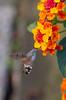 IMG_8197.jpg (Ivo Konopac AE) Tags: buchlovice hmyz kvety vylet zamek