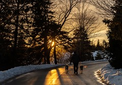 Walking the Dogs (Karen_Chappell) Tags: park sunset road people dog animal bowringpark stjohns evening winter cold january snow newfoundland nfld canada atlanticcanada avalonpeninsula trees silhouette orange sun scenery scenic