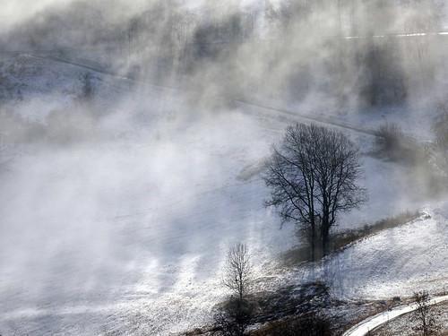 Arbre brume et soleil