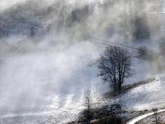 Arbre brume et soleil (JMVerco) Tags: arbre tree albero hiver winter inverno neige snow neve vercopictureme suisse switzerland swizzera coth winterbeauty flickrchallengegroup flickrchallengewinner