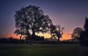 Evening Hues (Kevin_Jeffries) Tags: sunset evening hue kevinjeffries outdoor plant tree sky light magical silhouette dusk new newzealand nikkor nikon d7100 trees summer detail atmosphere