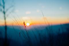 my senses reeled II (culuthilwen) Tags: sonyalpha230 takumar35mmf2 takumar35mm supertakumar takumar 35mm f2 m42 winter bokeh blurry blur sunset weeds light sky dof nature vintagelens vscofilm vscofilm00