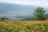 望優,忘憂 (ShawnRagg 尚雷格) Tags: eos450d efs1855isstm daylily hualien taiwan landscape liushidanshan 六十石山 金針花 花蓮 台灣
