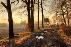 The shortest days (Jacek Pelczar) Tags: shortest day sunset winter solstice golden hour trees path fields midwinter poland silesia
