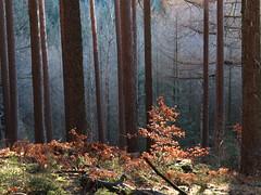 Thüringer Wald (germancute) Tags: outdoor nature landscape landschaft wald forest tree baum