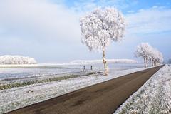 Winter wonderland (Pieter ( PPoot )) Tags: 2017 januari rijp winter wonderland wit