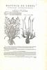 L'Obel-Page of text-1576 (melindahayes) Tags: 1576 qk41l7971576 lobelmatthiasde plantarum plantinchristophe folioformat latin