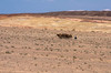 KNA_7532 (koorosh.nozad) Tags: iran persia persien kavirnationalpark nationalpark kavir semnan semnanprovince qasrebahramcarvanserai desert saltsea kashan isfahanprovince caravanseraimaranjab caravansarai caravansaray caravansaraymaranjab ir