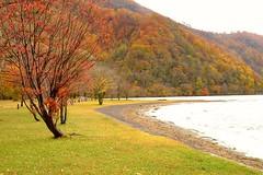 Lakefront (linwujin) Tags: landscape lake japan 十和田 tree maple autumn fujifilm xt1 xf1655 yellow orange nature