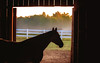 Horse Silhouetted in Barn (CrystalAlba) Tags: horses equine photography animals nature silhouette barn sunrise