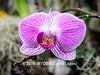 Duke Farms orchids-4142063-2 (myobb (David Lopes)) Tags: dukefarms hillsborough nj newjersey flower nature orchids olympus em1 omd