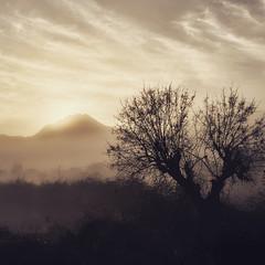 A tree in winter, sepia (EXPLORED!!!) (VillaRhapsody) Tags: dawn morning sunrise foggy mist mysterious tree valley rural village kayaköy fethiye winter sun challengeyouwinner silhouette bare sepia ruby3