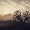 A tree in winter, sepia (EXPLORED!!!) (VillaRhapsody) Tags: dawn morning sunrise foggy mist mysterious tree valley rural village kayaköy fethiye winter sun challengeyouwinner silhouette bare sepia ruby3 ruby5