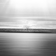 Loneliness (-Simulacrum-) Tags: landscape artisticshot creative blackwhite monochrome trees minimalism minimalistic peaceful nature nikon nikond5300 art photoart