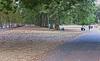 UK 2016 724 (Visualística) Tags: uk unitedkingdom reinounido gb greatbritain england inglaterra ciudad city urbano urban parque park londres london londra
