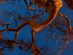 Tree fractals (johan__) Tags: blue wild black tree love beautiful up azul topv2222 1025fav wonderful amazing cool upsidedown gorgeous topv1111 great fraktal preto 2550fav preta fractal topv777 arvore upup magical breathtaking johan trd upp fabolous topv888 bl continuum minho svart mono gonewild cordelaranja whatabeauty coolshot moncao iwantse7en thecontinuum thisisportugal northportugal portugalnorte norraportugal organce belocontraste wonderfulcapture patternsandcolours downup svenskafotografer mathlesson