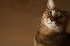 IMG_0266 (junku) Tags: cats cat canon eos kitten kitties 5d  lensbabies kin   canoneos5d eos5d