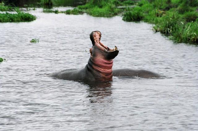 Kenya-Safari3-14.jpg