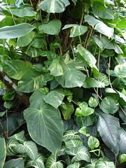 Jungle leaves (allispossible.org.uk) Tags: hot leaves forrest vivid palm greenhouse jungle tropical newbury humid rainforrest