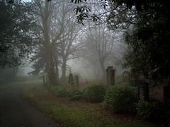 Greenock Cemetery (Strength) Tags: mist tree cemetery grave fog death scotland greenock eerie gloom