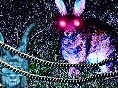 Donnie & Darko (Master Mason) Tags: rabbit art dark arte surrealism surreal tribute title surrealistic donniedarko romagna coniglio forlì context surrealismo sbtxt parcourbano lanouvellerevolutionsurrealiste