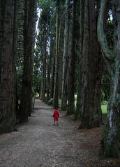 Redwood Pathway (EssjayNZ) Tags: trees newzealand 15fav max tag3 taggedout tag2 tag1 path 2006 essjaynz pathway okoroire taken2006 alphathemeh sarahmacmillan