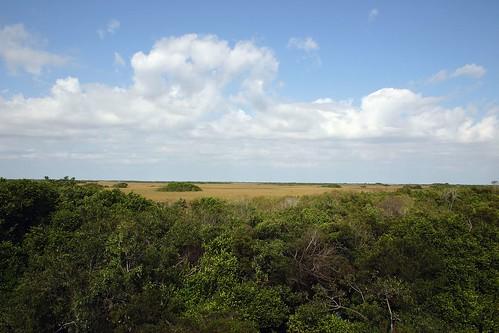Shark Valley Landscape