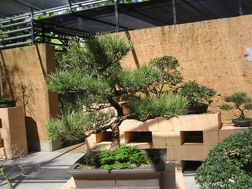 nz landscape designer nzlandscapes photos japanese garden bonsai house - Landscape Design Japanese Garden