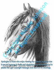 Gypsy Vanner Head (bivoir) Tags: horse art illustration wow sketch drawing sketches horsehead stallion animalart pencildrawing gypsyvanner horseart