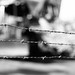 Obligatory Barbed Wire Bokeh [b&w]