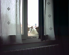 Fusillo sul davanzale 1 (*DaniGanz*) Tags: window cat kitten finestra gatto micio fusillo catsandwindows daniganz
