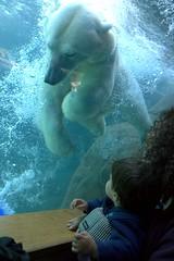 Polar Splash (jetrotz) Tags: water mammal zoo underwater sam screensaver bubbles rochester polarbear bluegreen ourkids senecaparkzoo